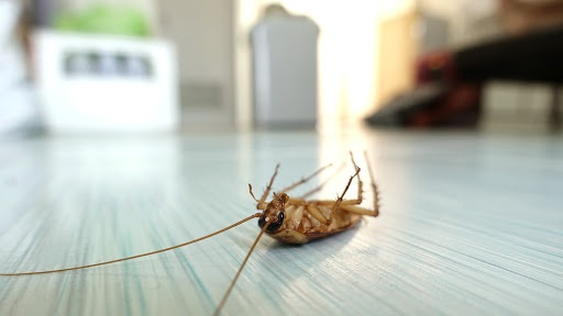 Signs That You Need Pest Control Services