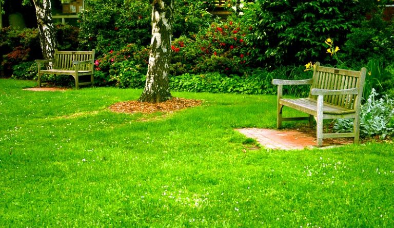 Do fertilisers really help keep your lawn looking good?