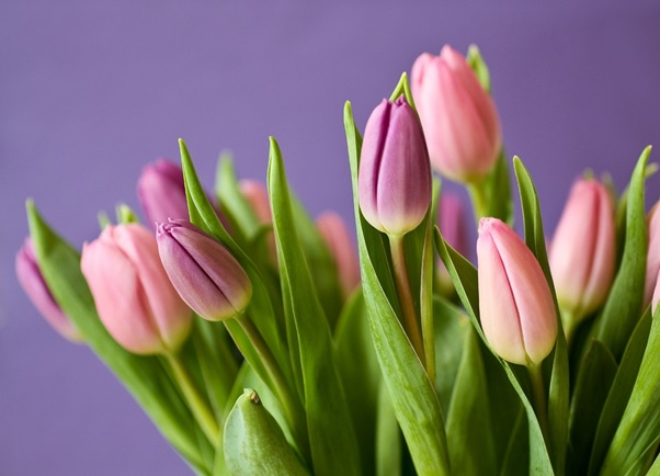 Why Flowers Make Ideal Spring Gifts